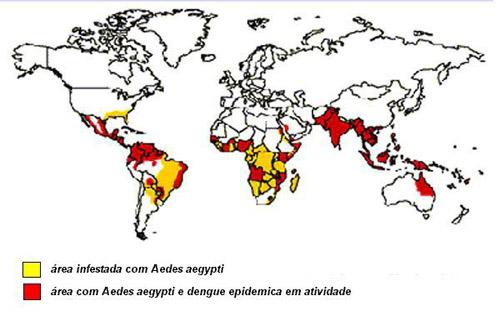A dengue no mundo. A Doença: