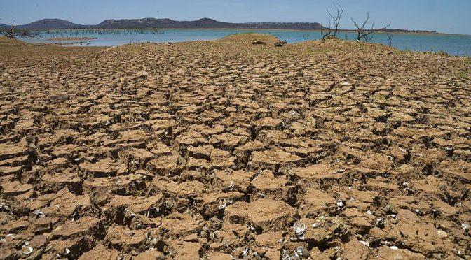 Efeitos da biodiversidade sobre o clima ainda são incertos