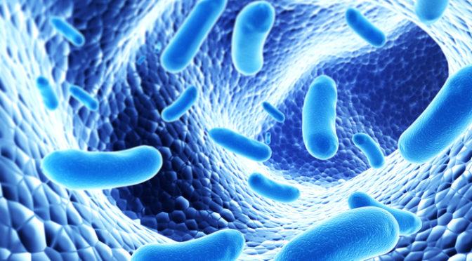 Microrganismos à la carte