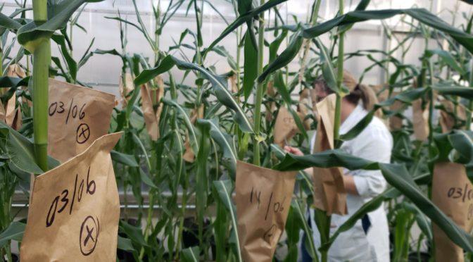 Pesquisas buscam manter produtividade da agricultura diante das mudanças climáticas