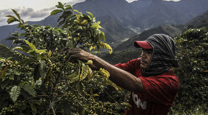 Mudanças climáticas afetam produção cafeeira no Brasil