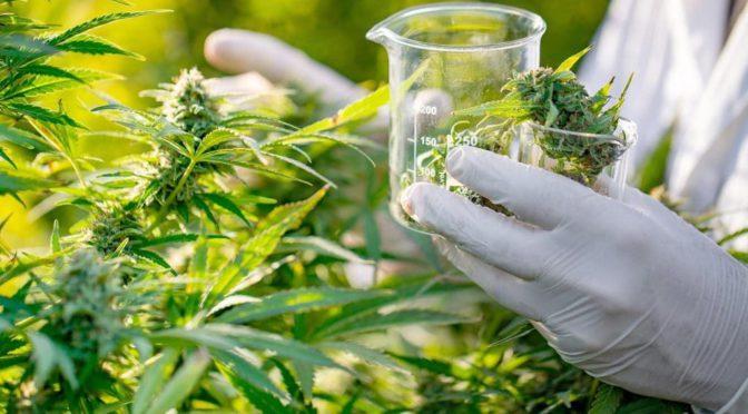 Ayahuasca e cannabis figuram em estudos brasileiros sobre potencial tratamento de depressão e ansiedade