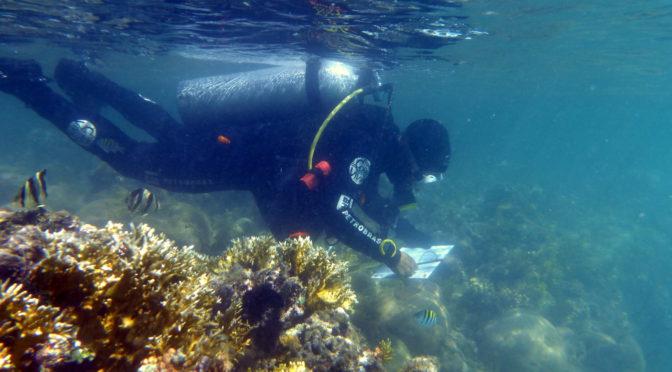 Quando os corais descolorem