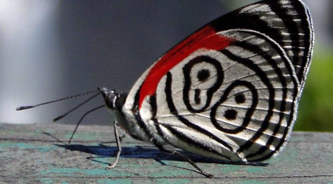 Cientistas respondem a curiosidades frequentes sobre os insetos