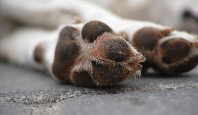 Quanta dor os animais sentem?