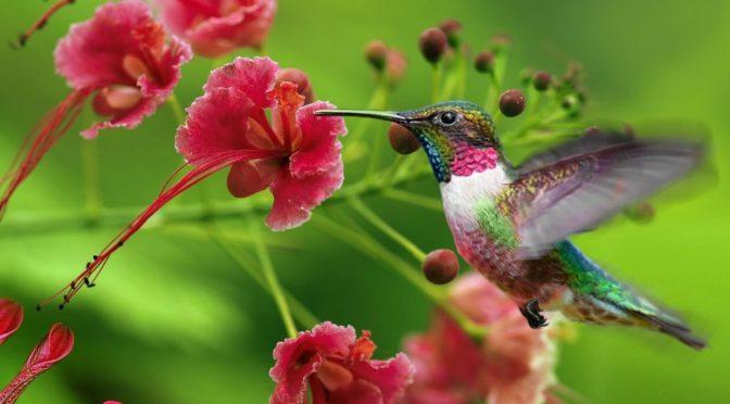 O colorido das flores e a polinização