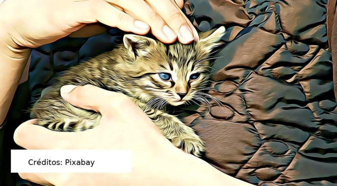 Pandemia aumenta abandono, mas também adoção de pets