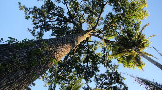 Uma visão econômica sobre a conservação da biodiversidade e serviços ecossistêmicos