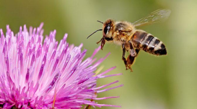 Desaparecimento de abelhas gera novas políticas para uso de agrotóxicos