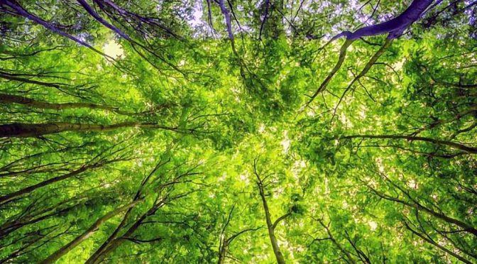 Clique aqui para ler todo conteúdo do dossiê Biodiversidade e Serviços Ecossistêmicos