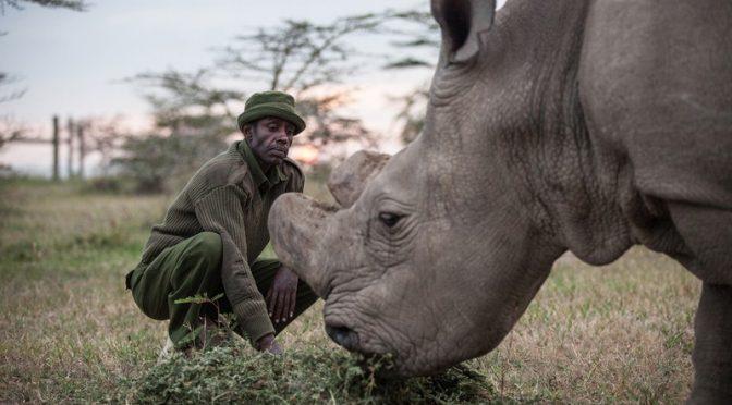 Menos que 20 extinções por ano: será que o mundo precisa de uma meta única para a biodiversidade?