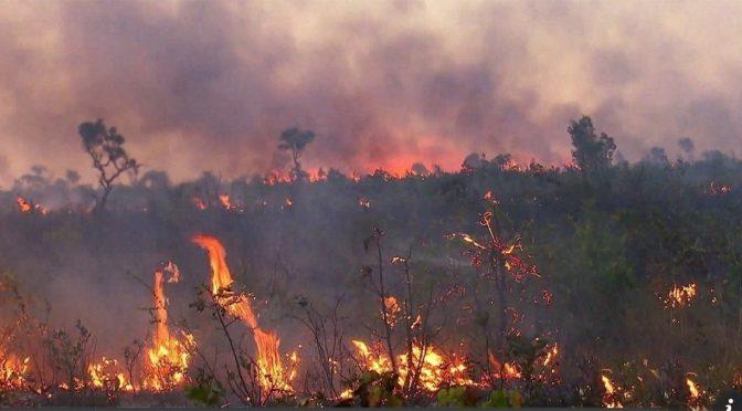 Carlos Joly:  'Nossa biodiversidade está sendo incinerada'