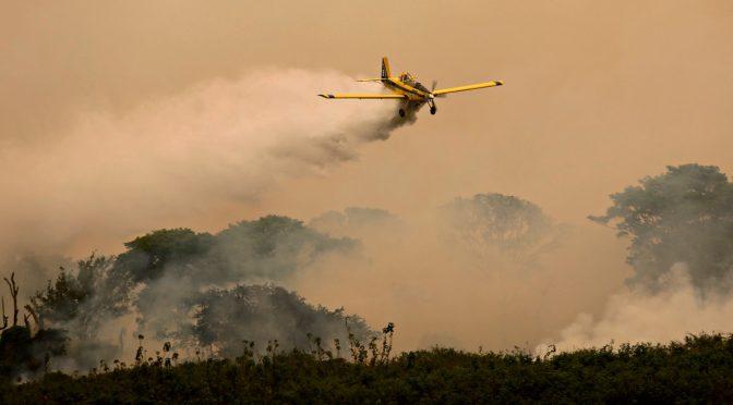 Incêndios catastróficos no Pantanal prejudicam biodiversidade, economia e população local