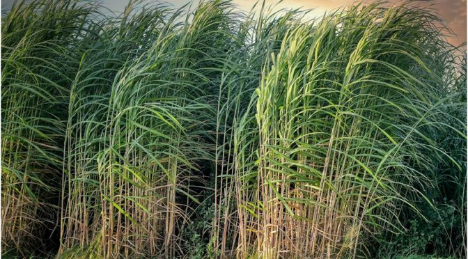 Com a matriz energética mais renovável do mundo, Brasil lidera produção de biocombustíveis