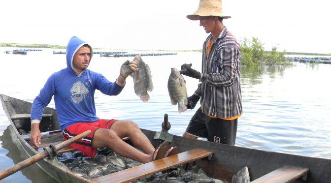 O pescado e a segurança alimentar