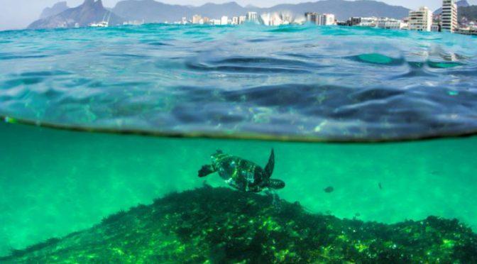 Baía Urbana: documentário mostrou vida sob poluição de cartão postal do Rio de Janeiro